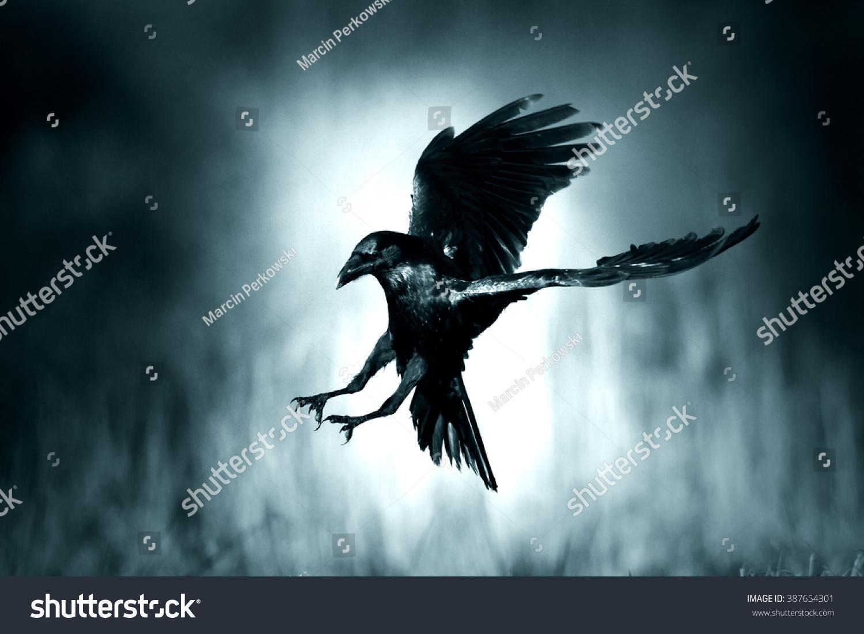 Black raven fly...