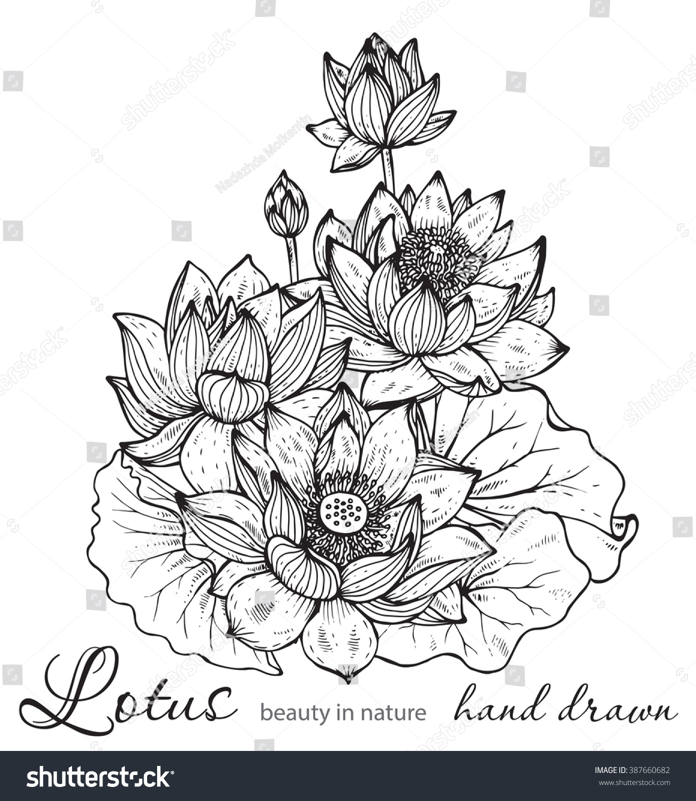 Beautiful monochrome vector floral bouquet of lotus flowers and id 387660682 izmirmasajfo