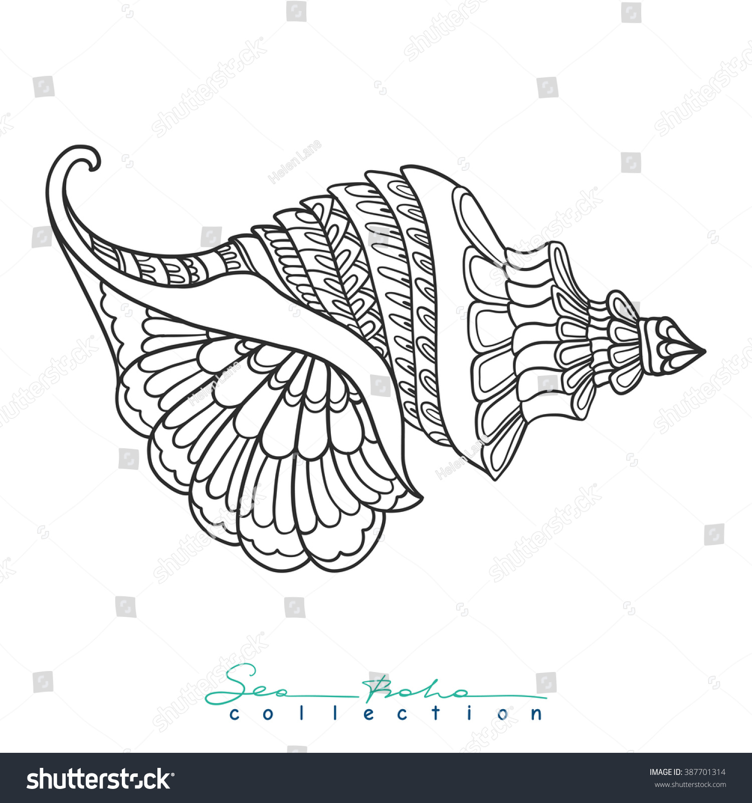 decorative sea shell outline drawing coloring stock vector