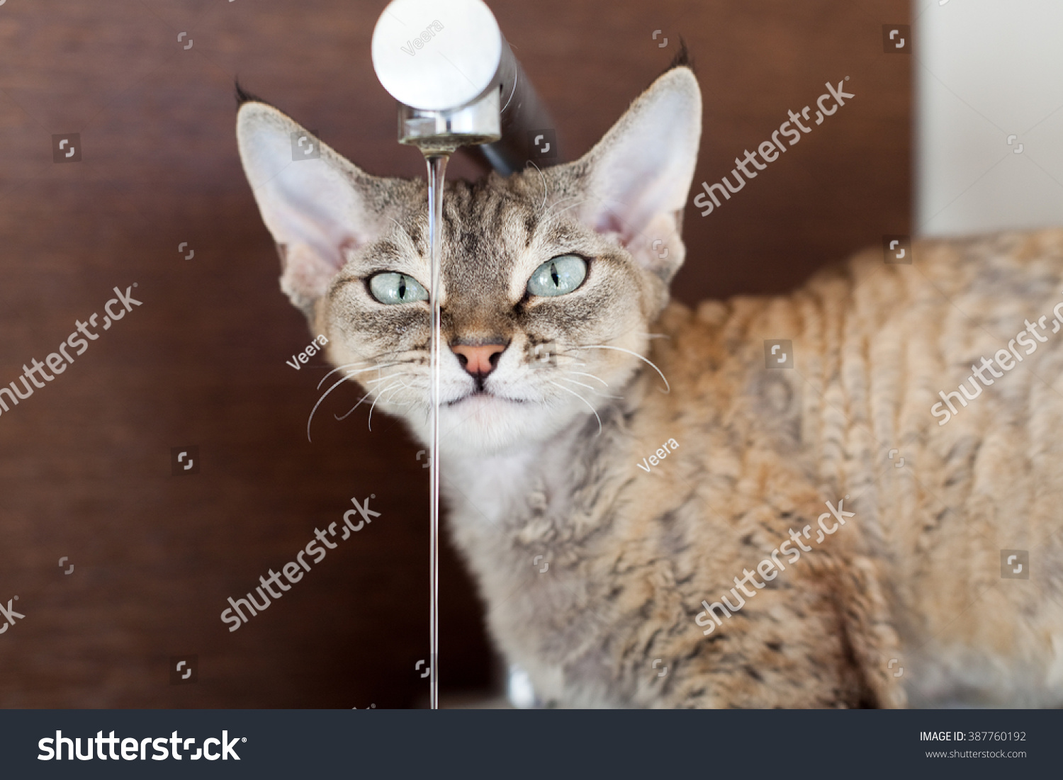 Cat Drinking Fresh Water Faucet Portrait Stock Photo 387760192 ...