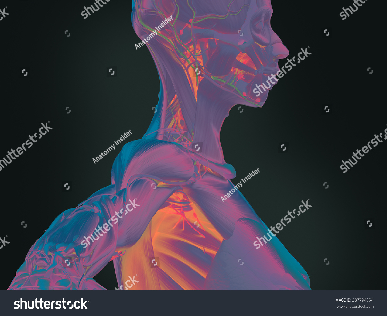 Human anatomy 3D futuristic technology scan. Female side profile of ...