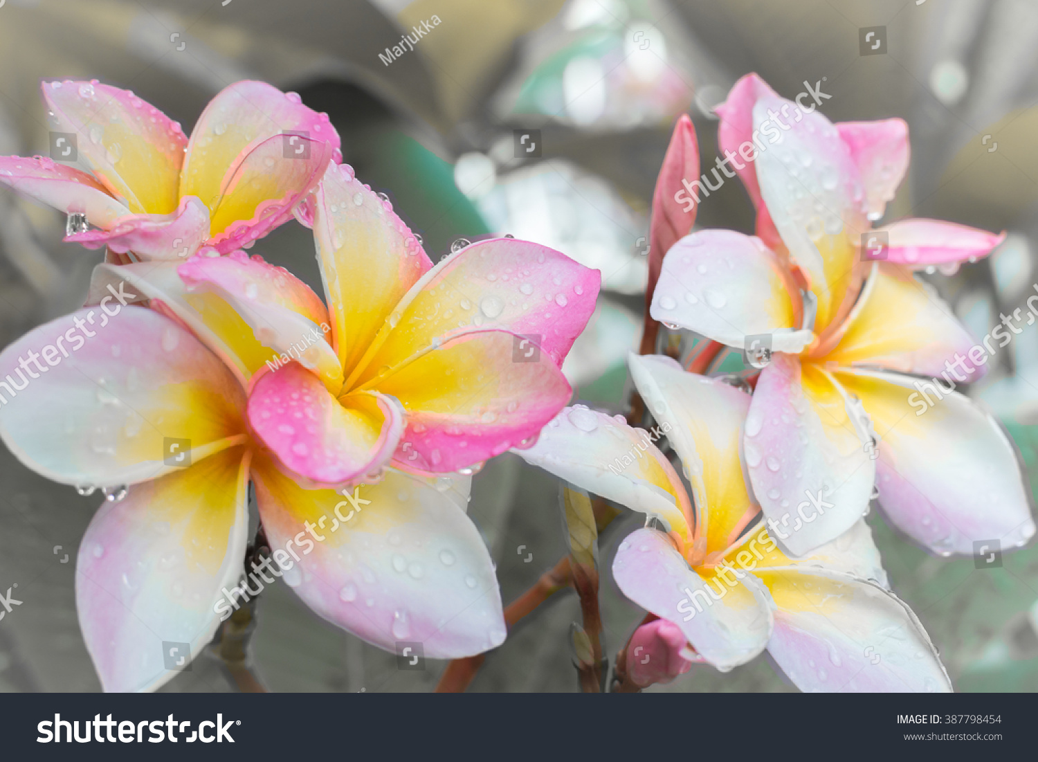Tropical Pink White Yellow Flowers Growing Stock Photo Edit Now