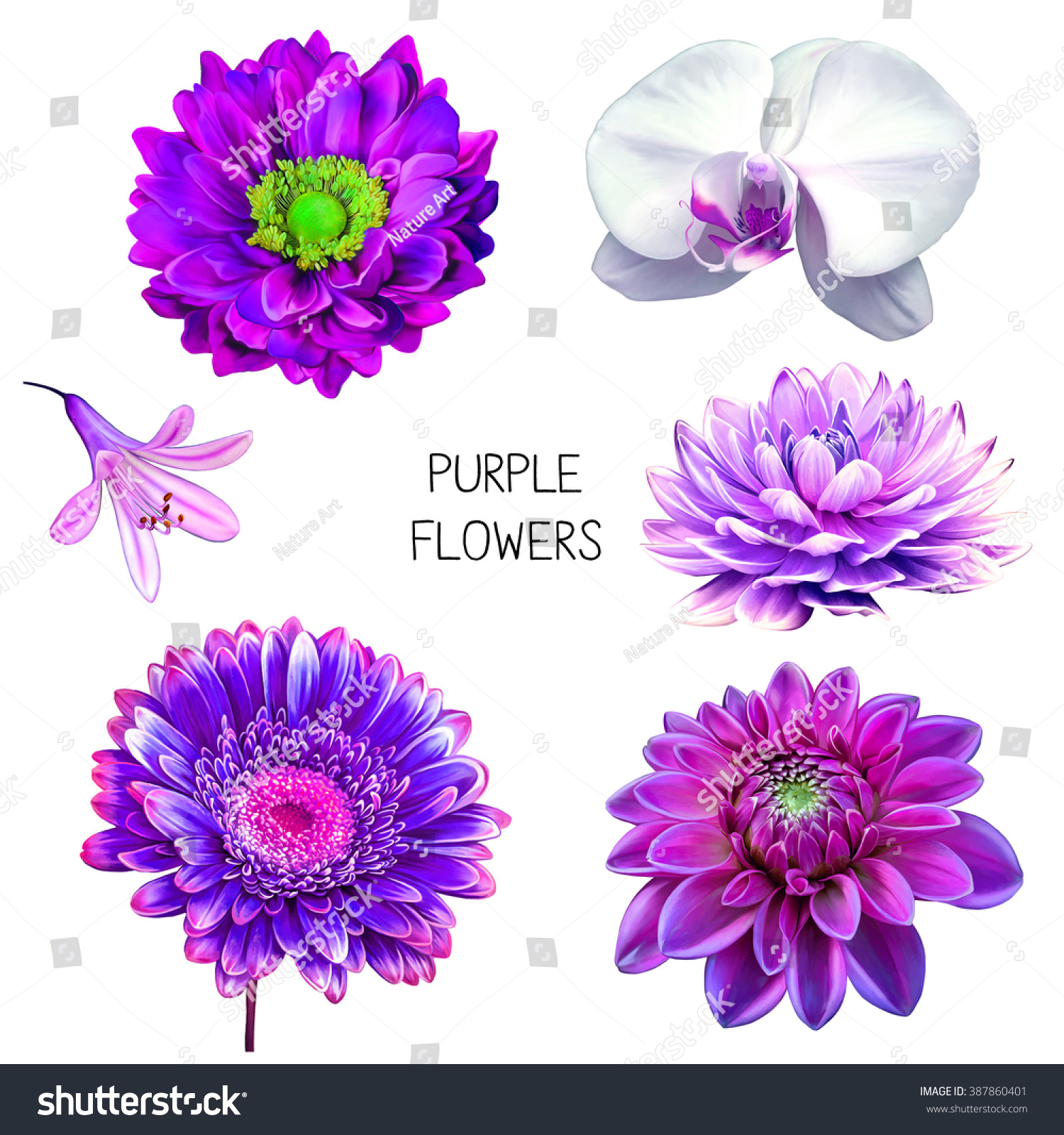Illustration Beautiful Red Purple Pink Flowers Stock Illustration