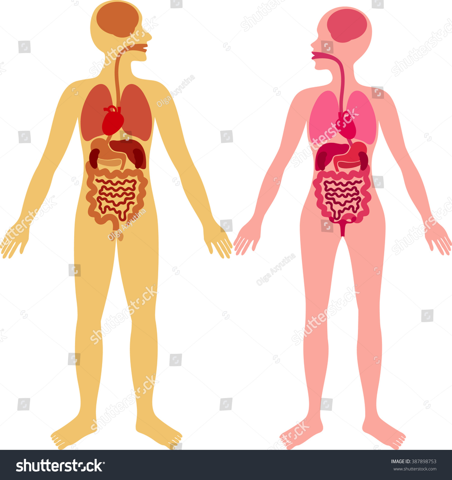 Man Woman Anatomy Stock Vector Royalty Free 387898753 Shutterstock