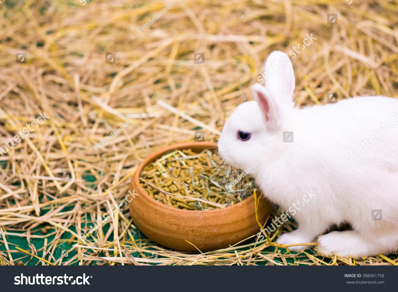 Soft Focus White Rabbit Eating Food Stock Photo Edit Now 388061758