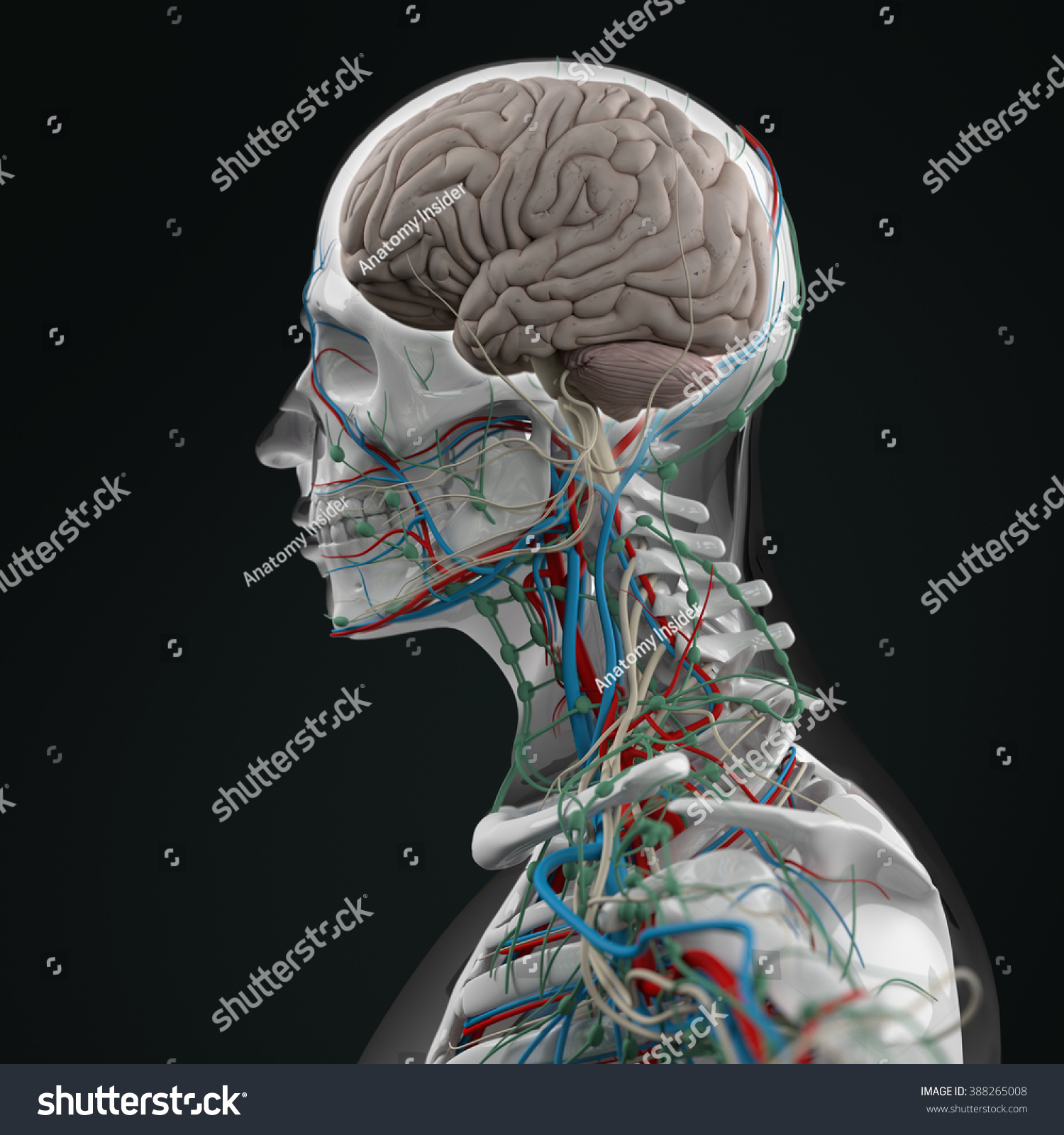 Human Anatomy Neurology 3 D Futuristic Technology Stock Illustration