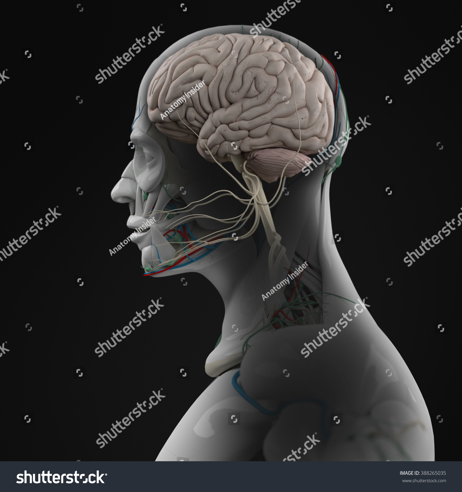 Human Anatomy 3 D Futuristic Technology Scan Stock Illustration ...