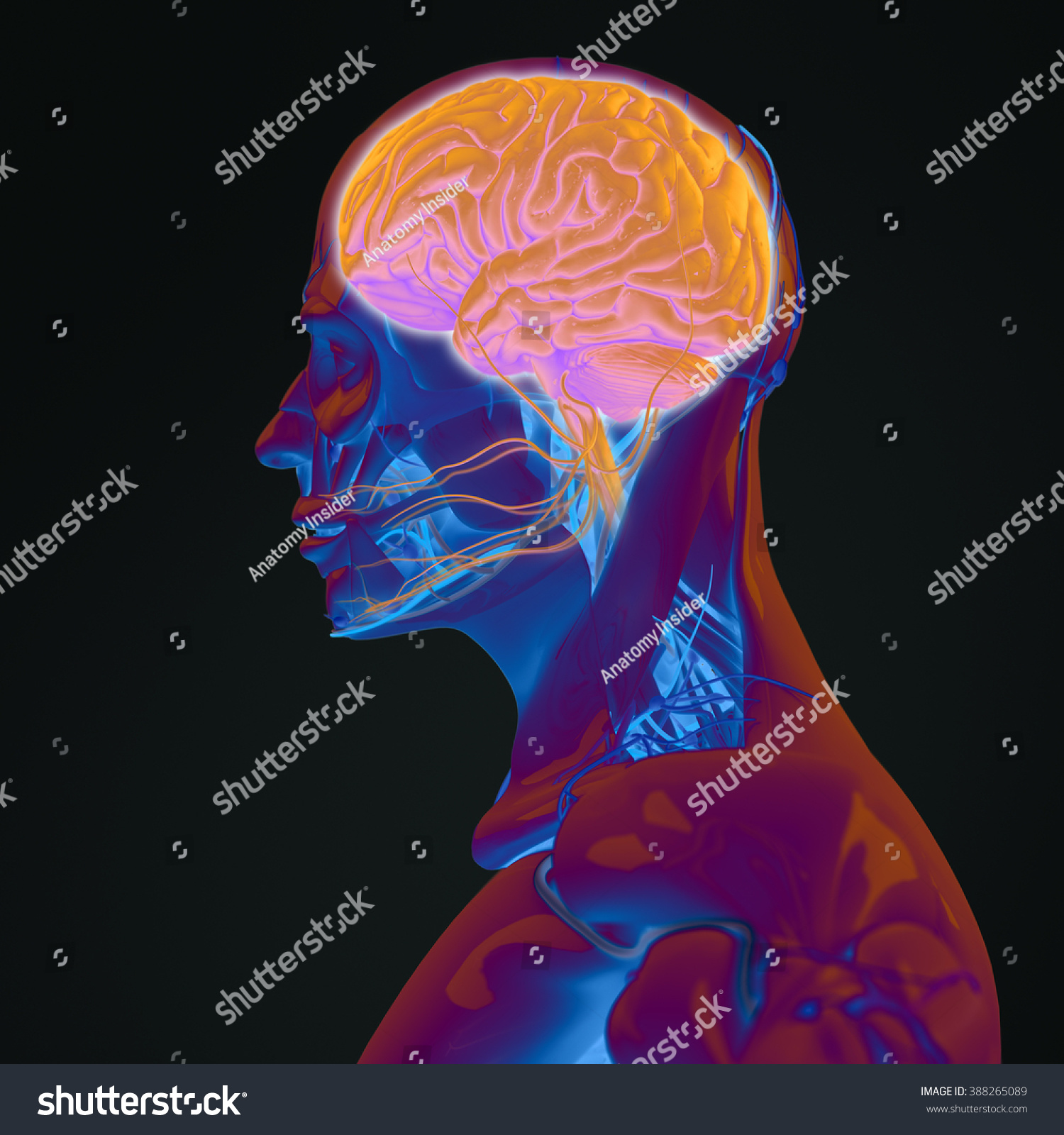 Human Anatomy 3d Futuristic Technology Scan Stock Illustration ...