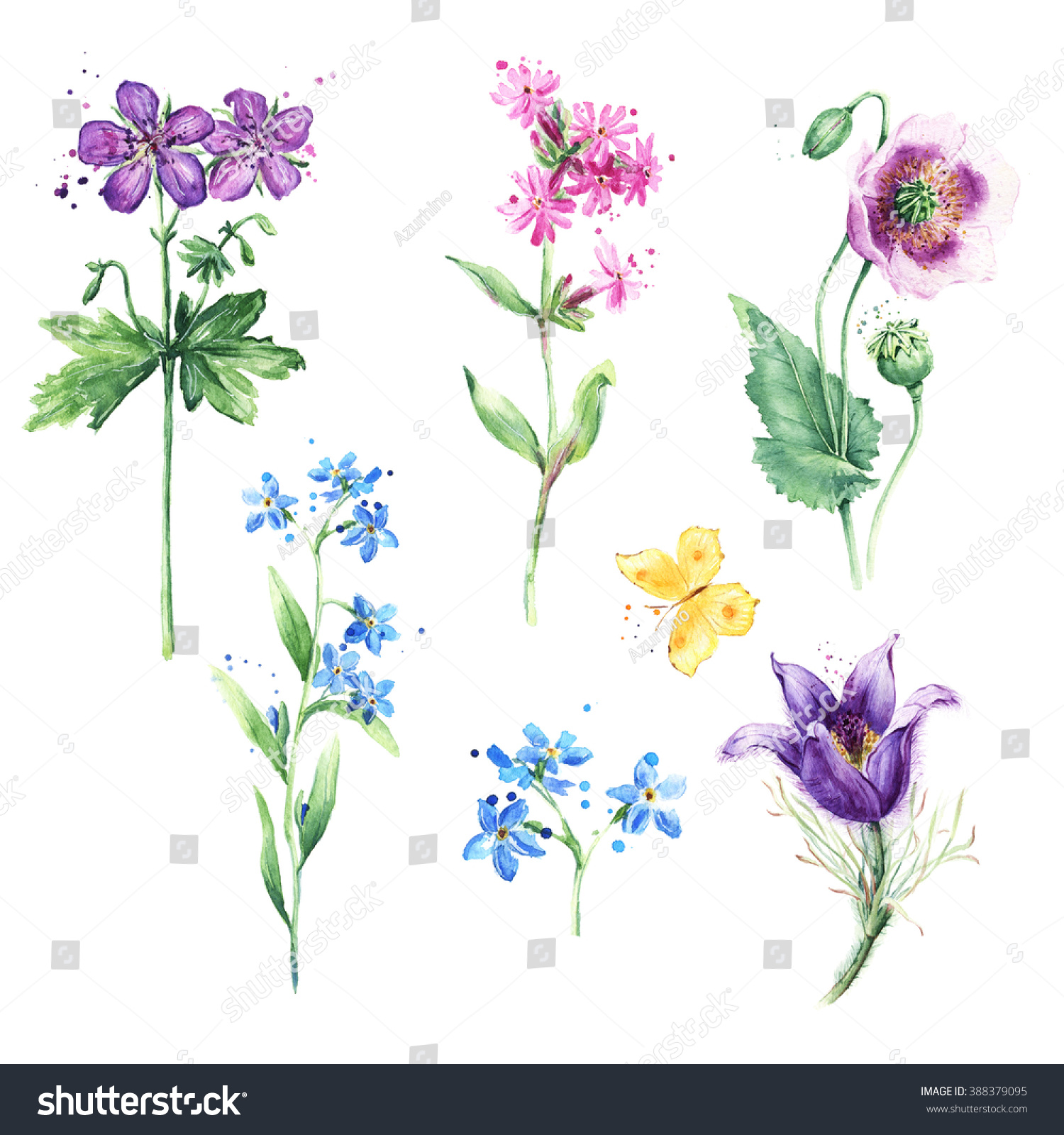 Meadow Floral Set Collection Wild Flowers Stock Illustration 388379095 Shutterstock