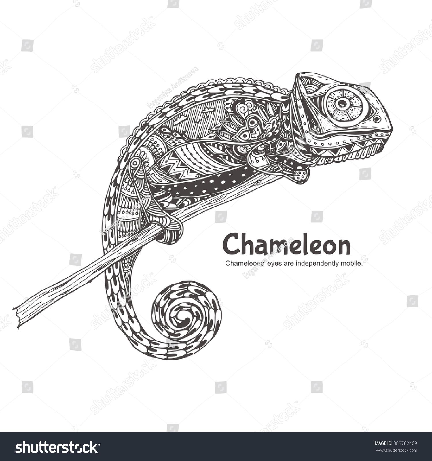 chameleon doodle pattern coloring page zendala stock vector