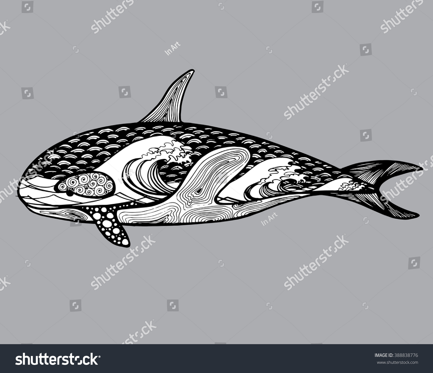 killer whale predatory whale fish sea stock vector 388838776