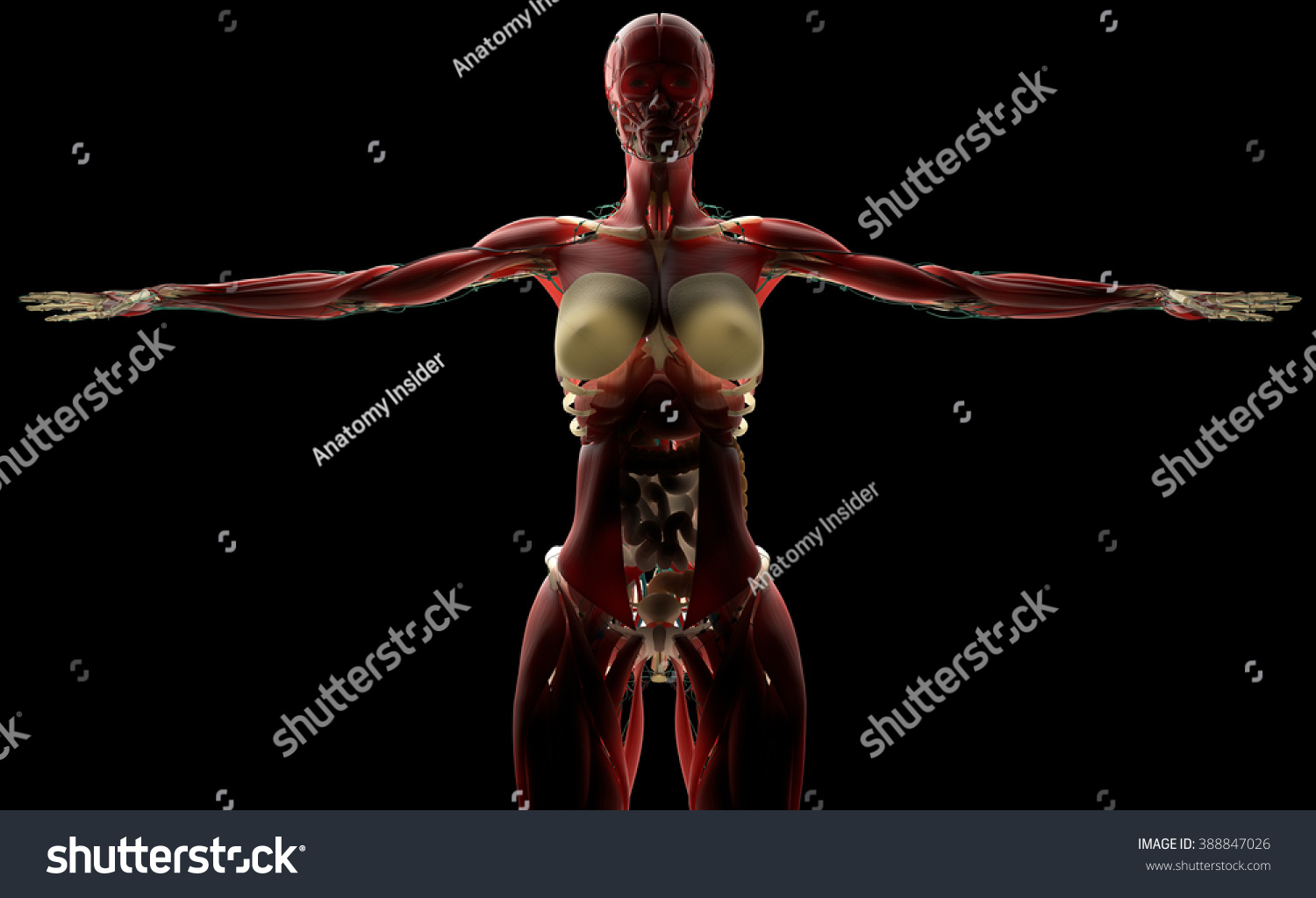 Human Anatomy Female Biology On Black Stock Illustration 388847026 ...