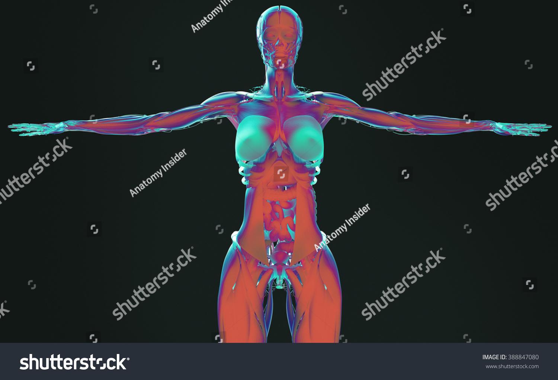 Royalty Free Stock Illustration Of Human Anatomy Female Futuristic 3