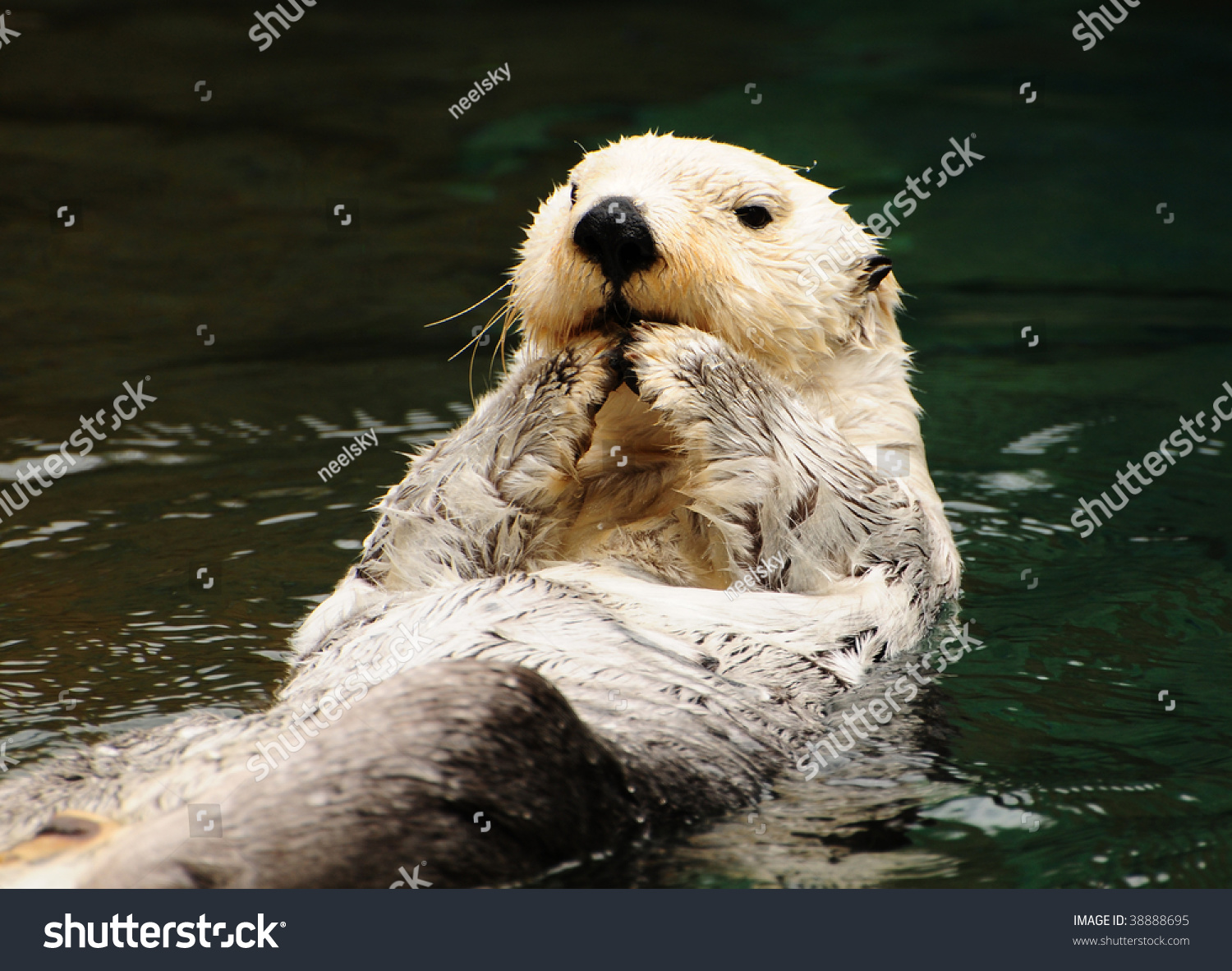 Arctic tundra white otter eating fish with contempt in for What do fish eat in the ocean