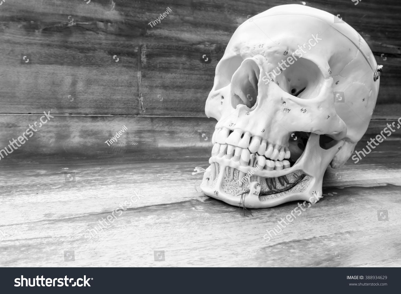 Human skull black white color concept stock photo edit now