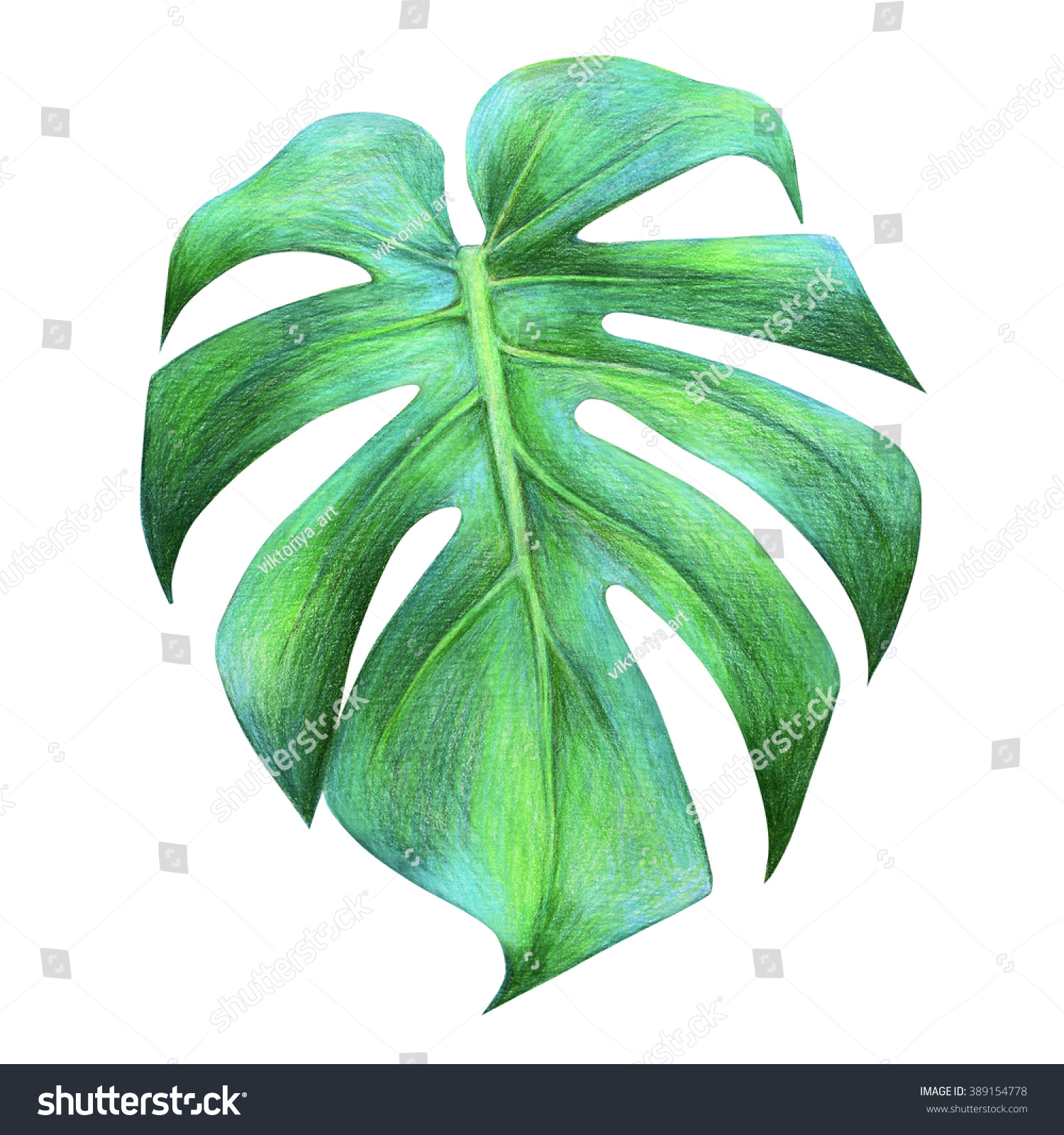 Tropical dragon leaf drawing