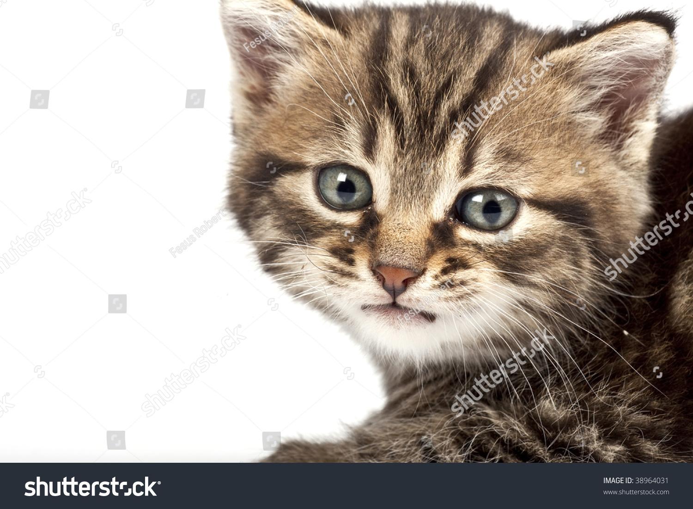 Adorable Kitten White Background Stock