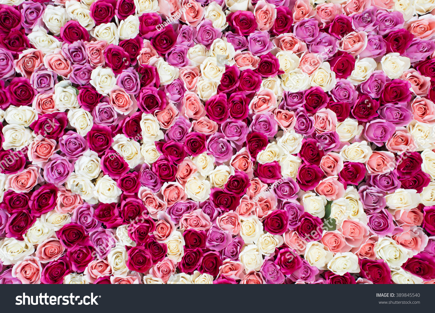 Flowers Wall Background Amazing Red White Stock Photo Edit Now 389845540
