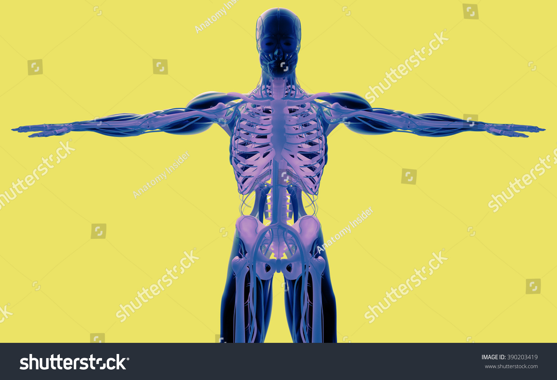 Human Anatomy 3 D Futuristic Scan Technology Stock Illustration ...