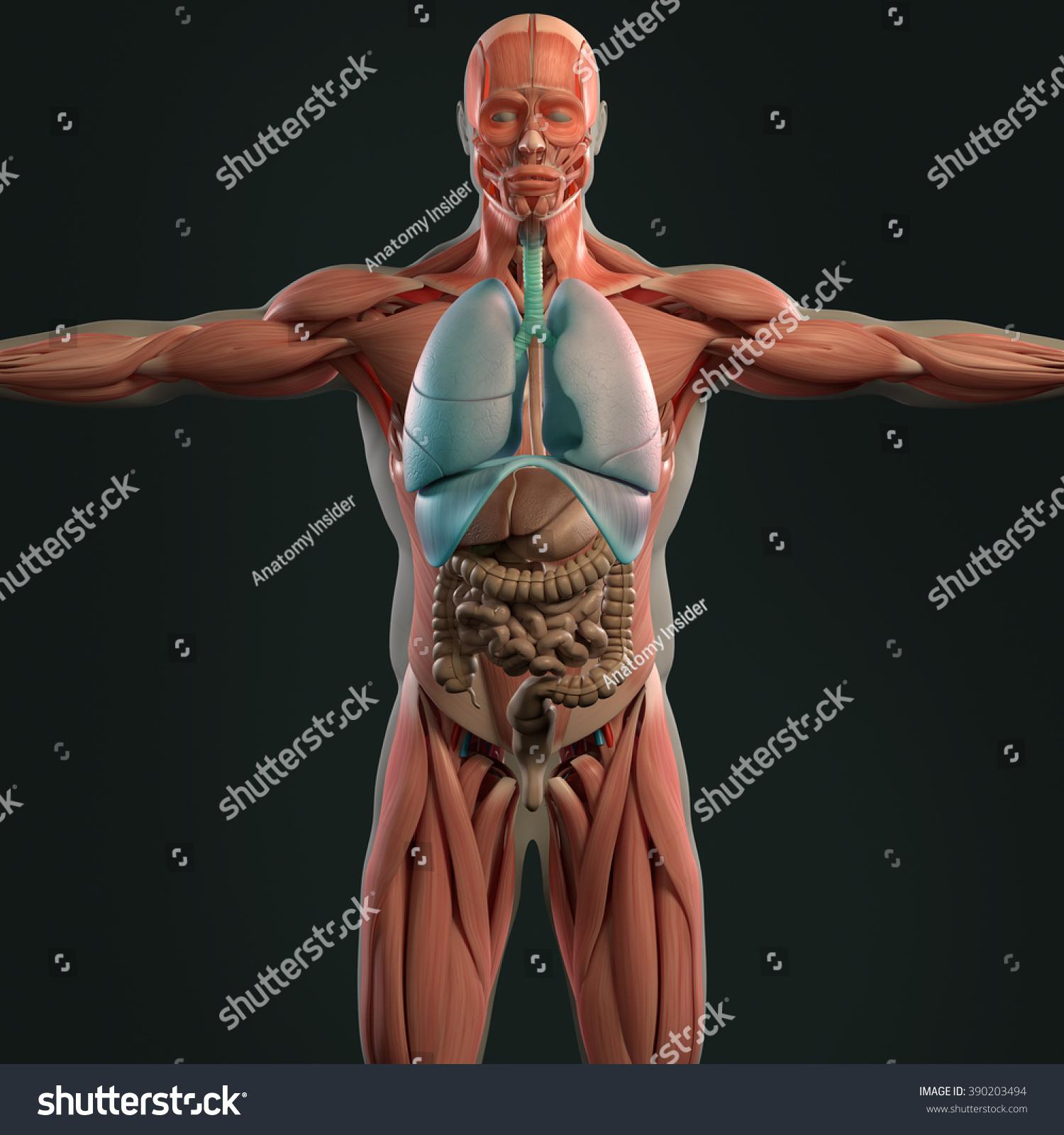 Human Anatomy 3 D Futuristic Scan Technology Stock Illustration