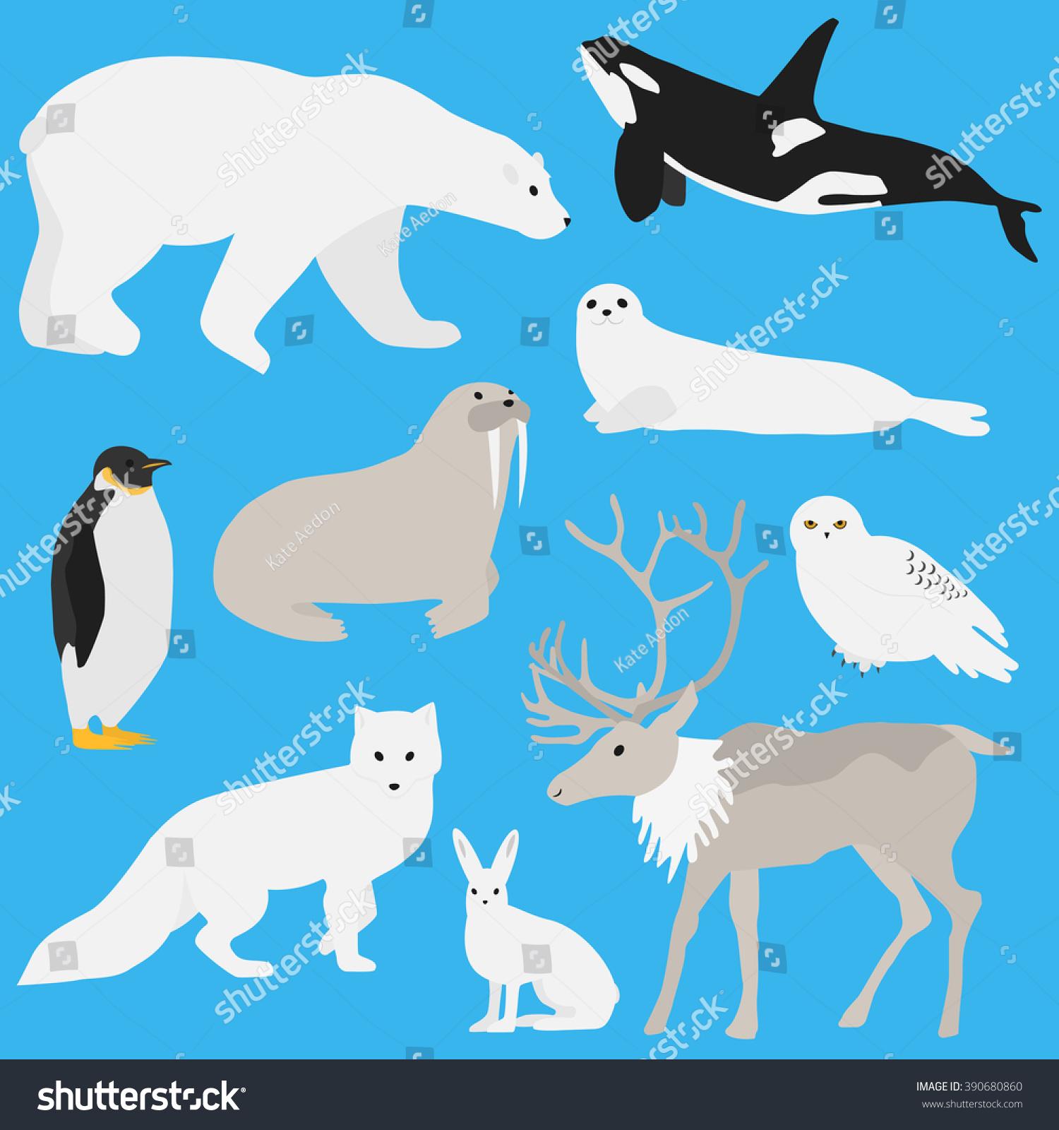 arctic animals collection flat minimal vector stock vector