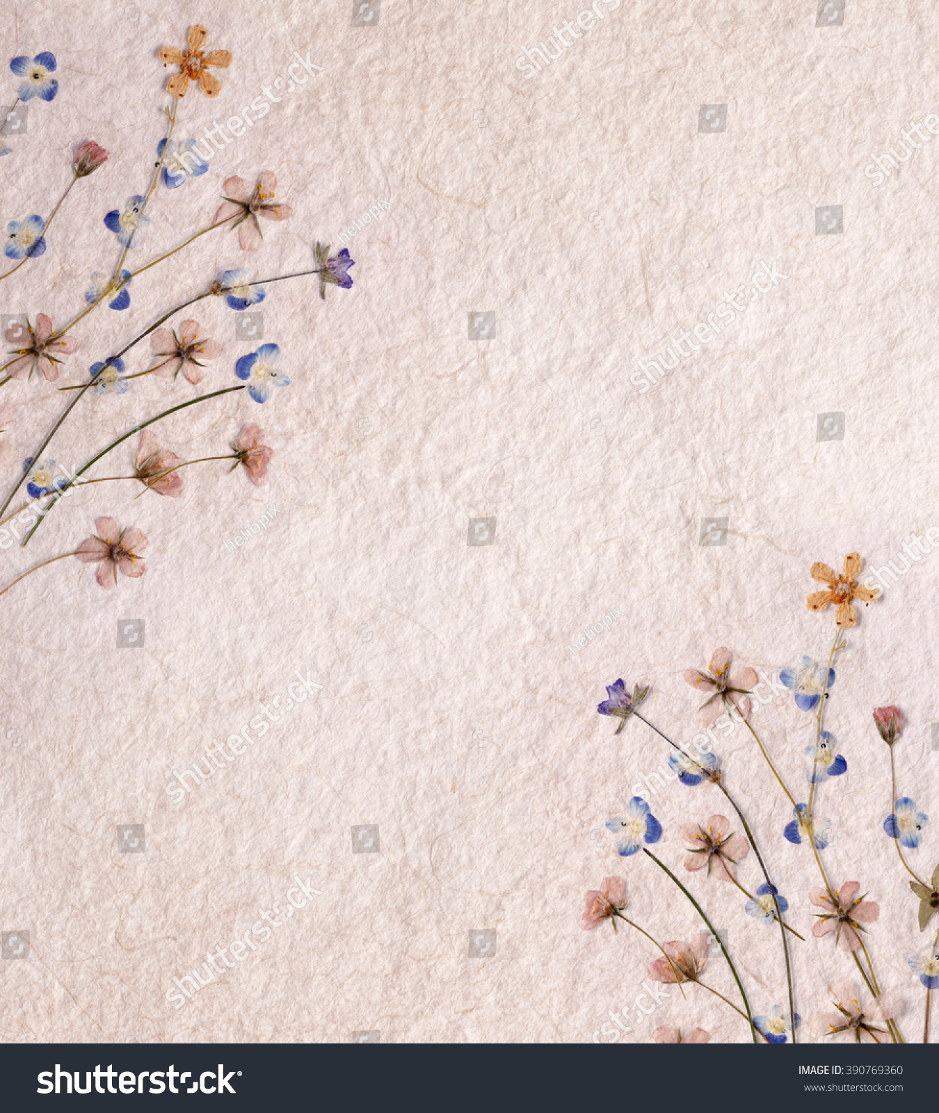 Old Textured Paper Dried Pressed Flowers Stock Photo Edit Now