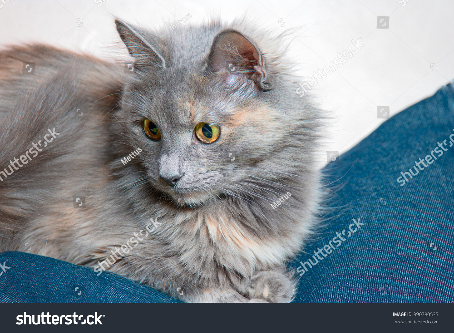 stock-photo-cute-gray-cat-is-sitting-on-