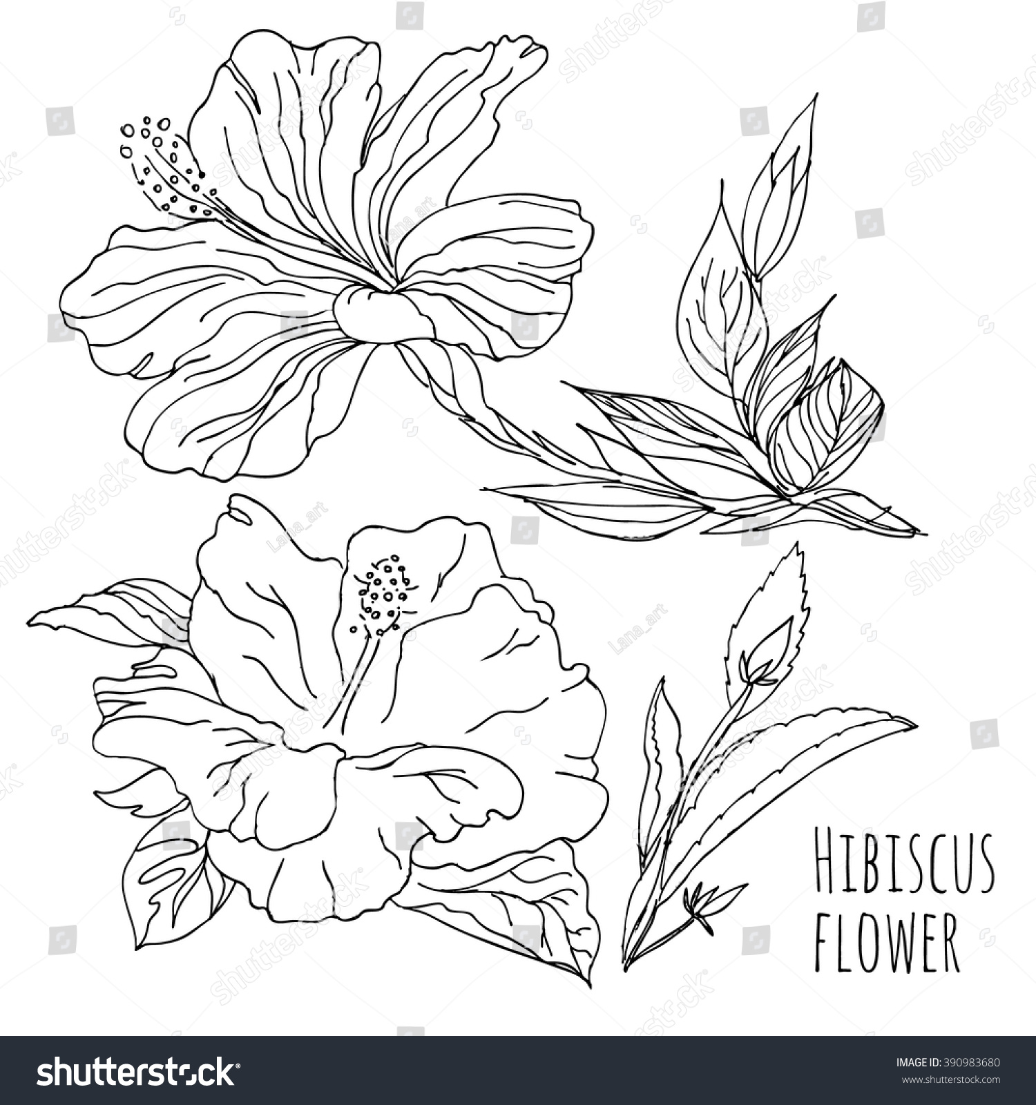 Hibiscus Flower Linear Hand Drawing Vector Black Stock Vector