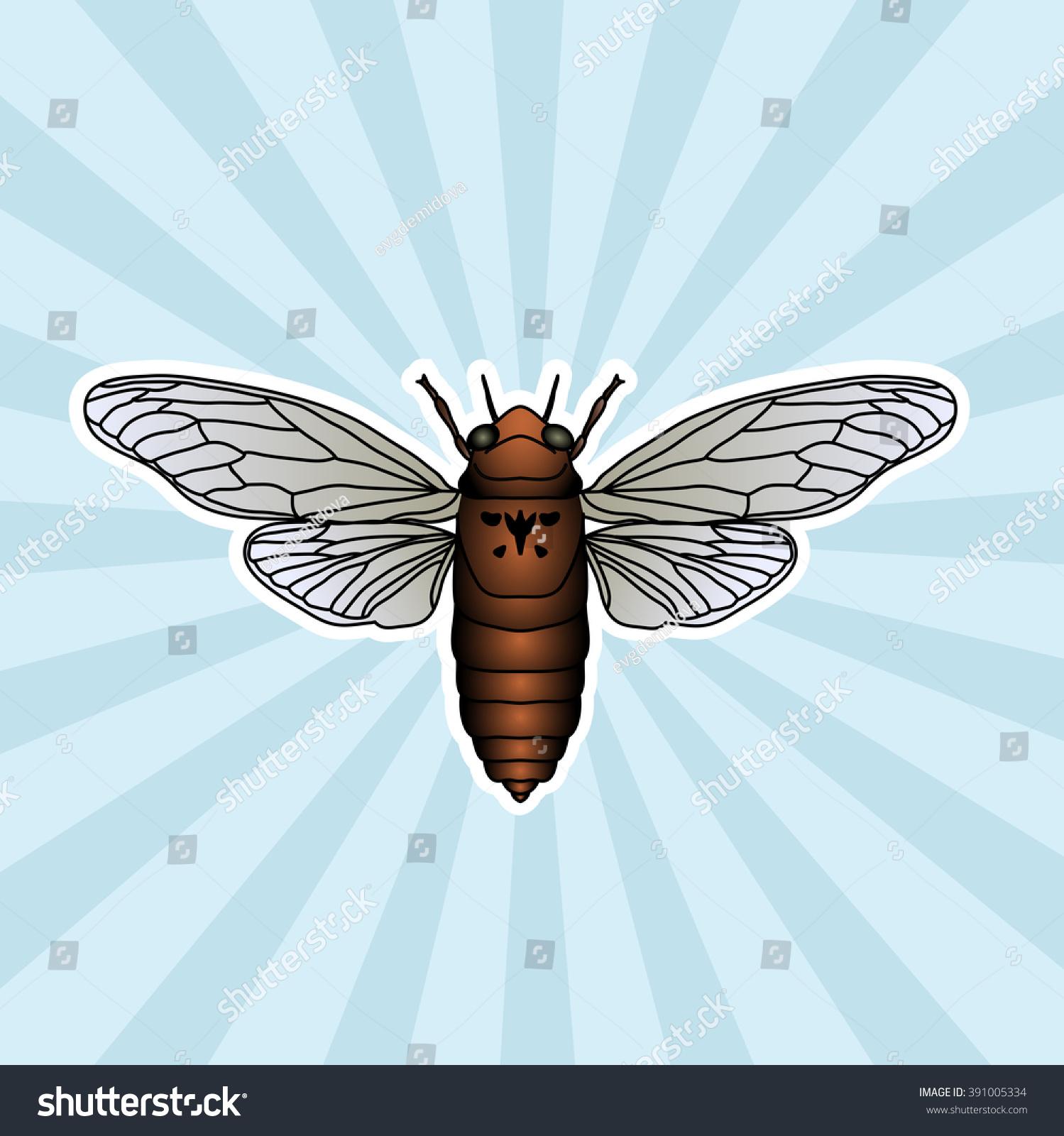 Insect Anatomy Sticker Cicada Cicadidae Chremistica Stock Vector ...