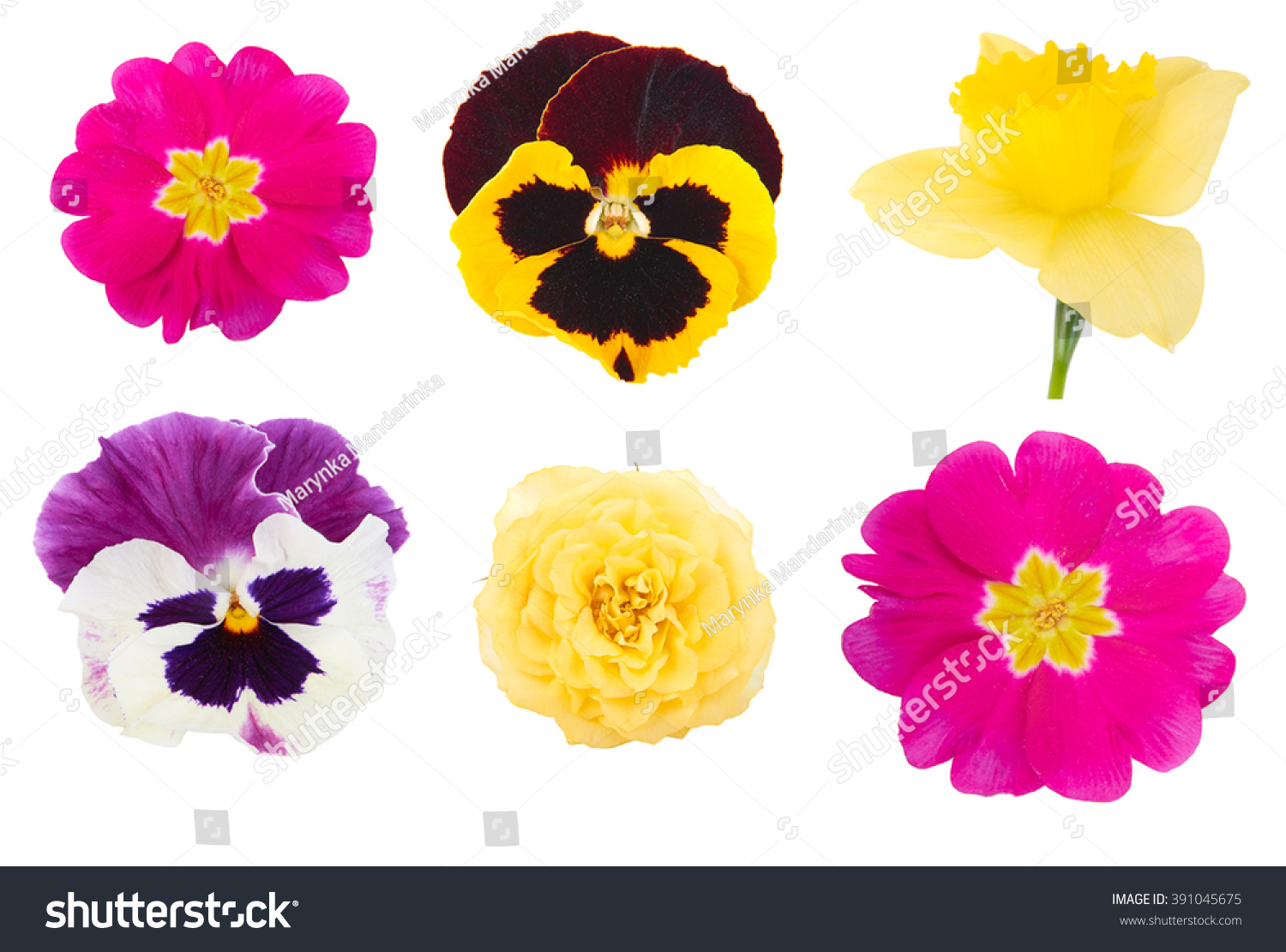 Set Different Types Spring Flowers Isolated Stock Photo Royalty