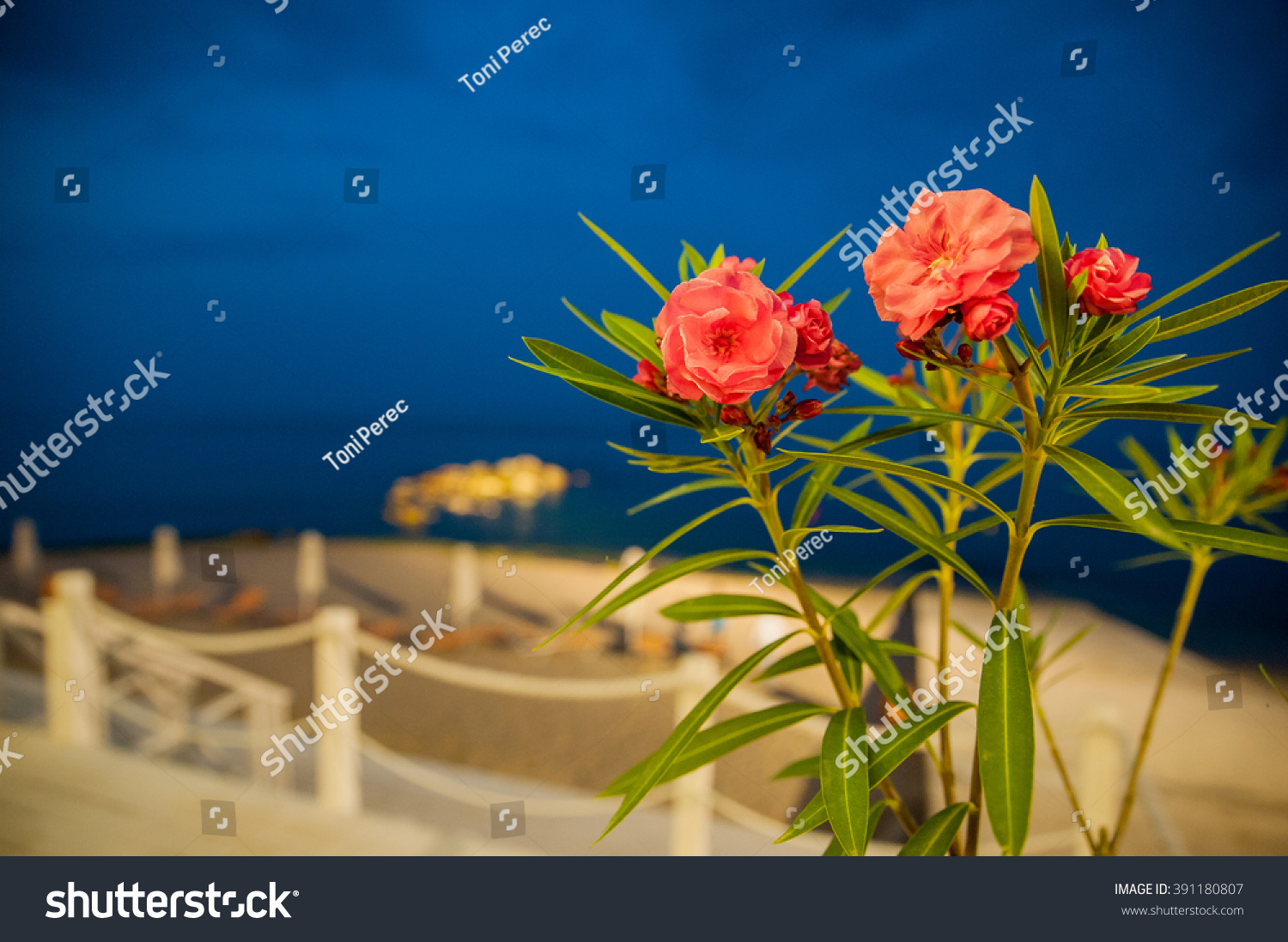 Beautiful flowers beautiful night stock photo 391180807 shutterstock beautiful flowers in beautiful night izmirmasajfo