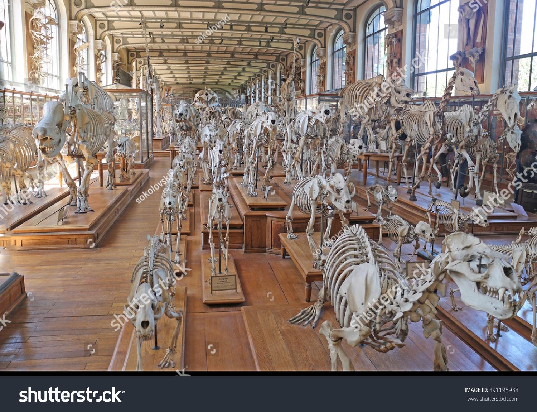 Gallery Paleontology Comparative Anatomy Paris August Stock Photo