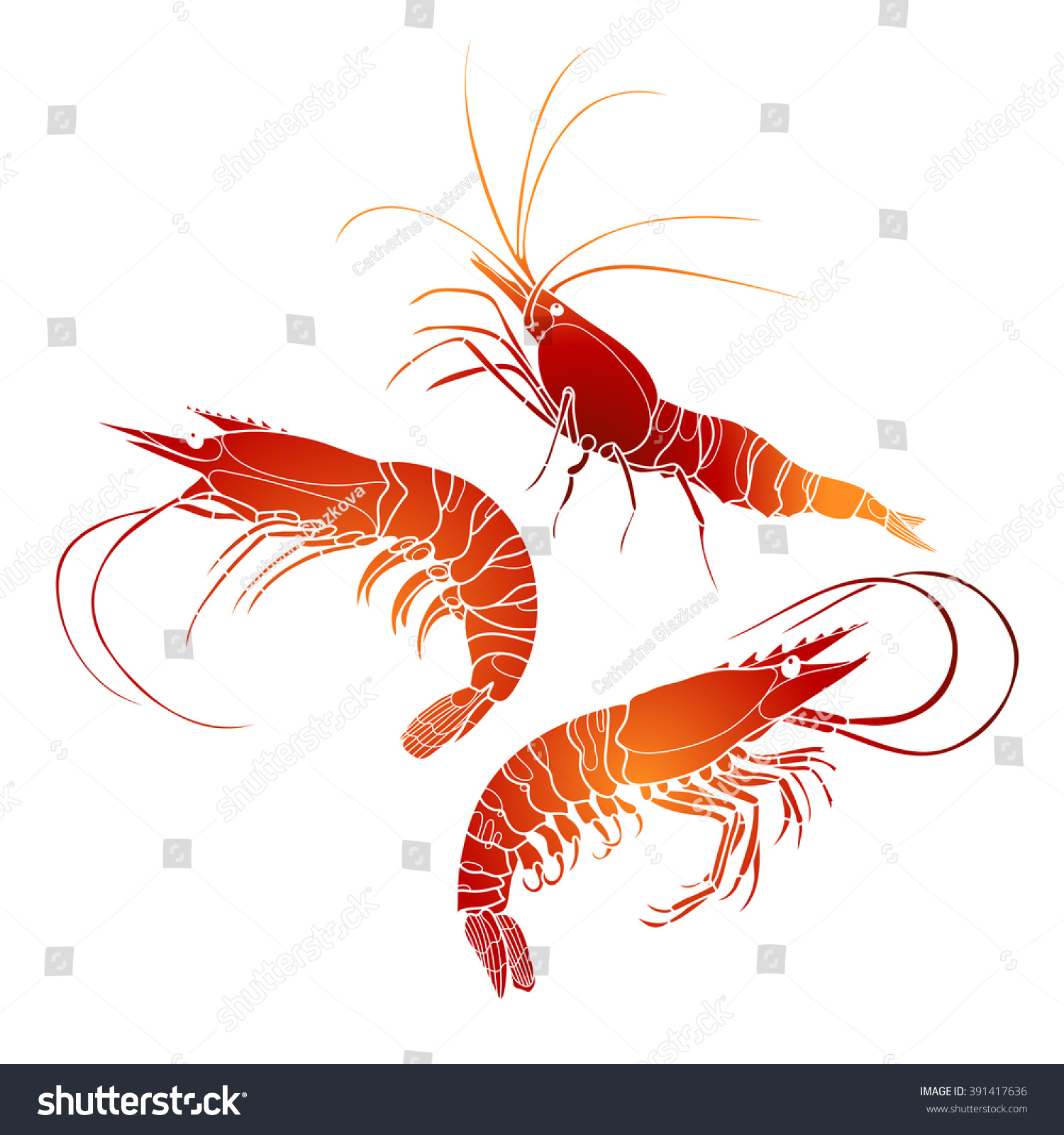 Graphic Vector Shrimps Collection Drawn Line Stock Vector HD ...