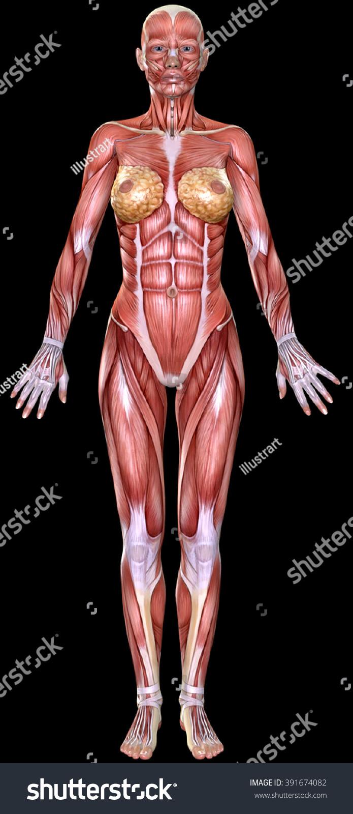 Anatomy female body
