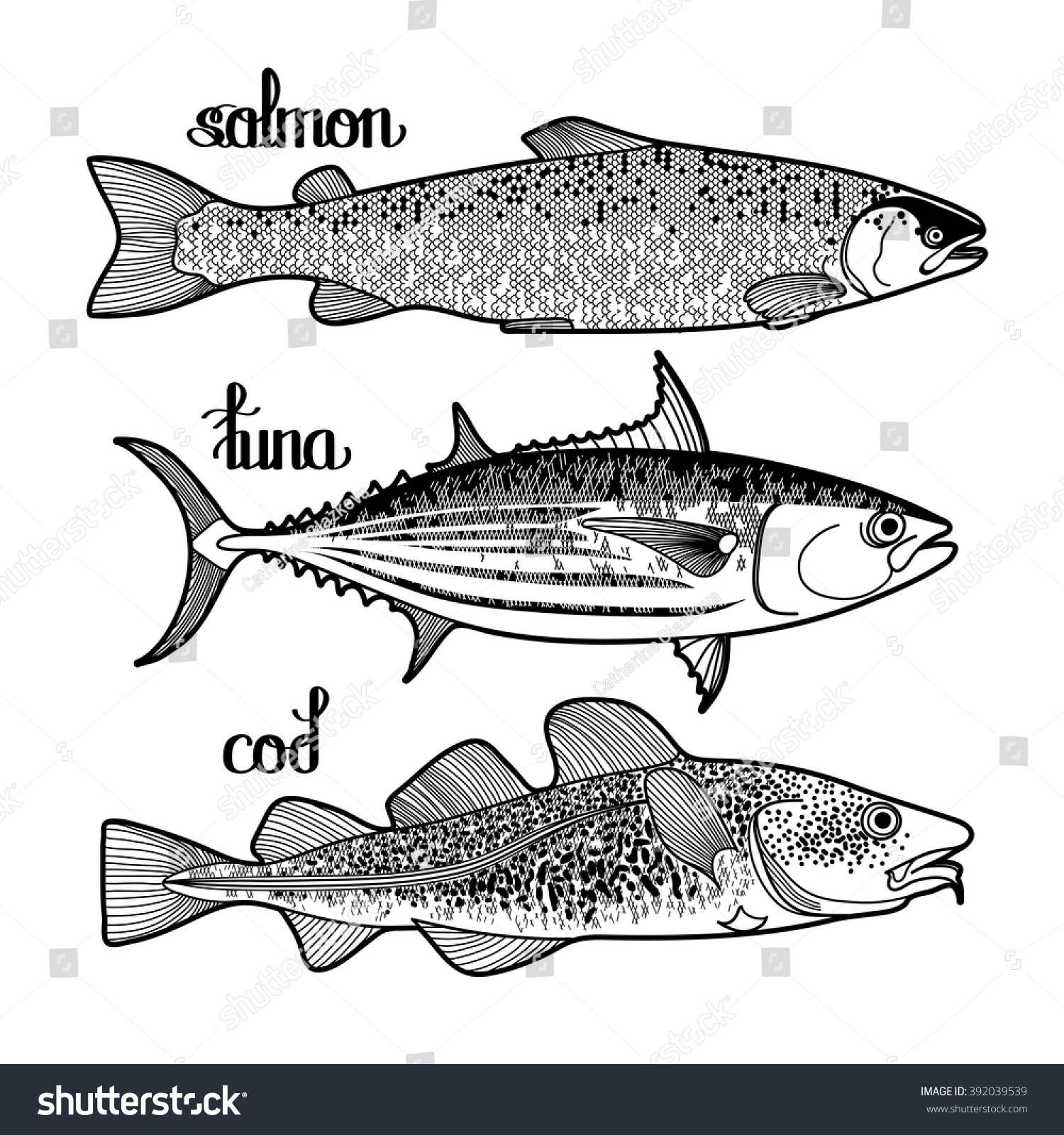 graphic fish collection drawn line art stock vector 392039539