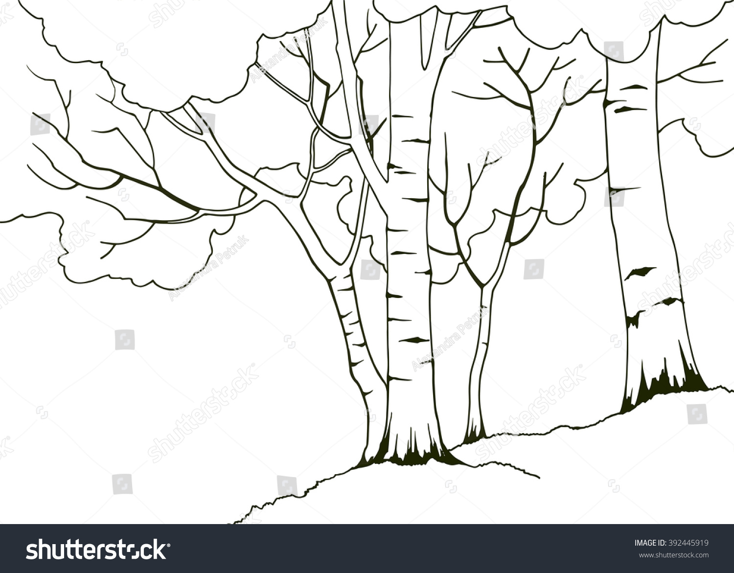 cartoon hand drawn nature illustration with four birch trees coloring book page - Birch Tree Branches Coloring Pages