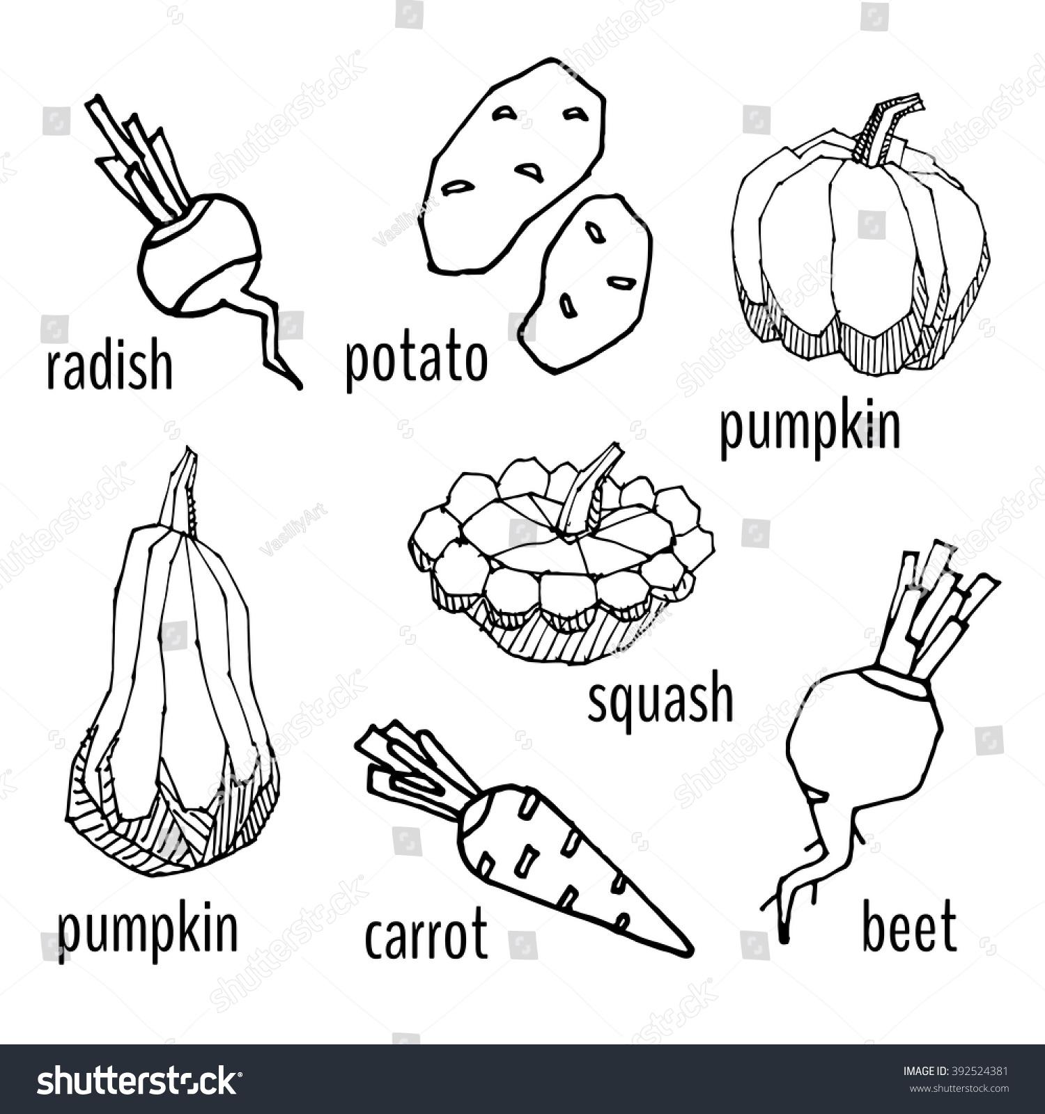 Coloring Book Roots Radish Potato Pumpkin Stock Vector 392524381 ...
