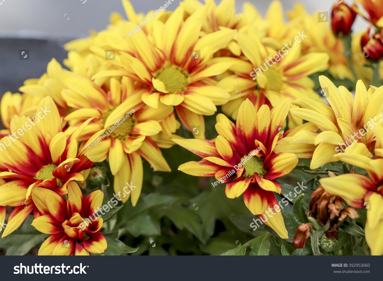 Bright Spring Flowersvarious Fantastic Flowers Close Up Ez Canvas