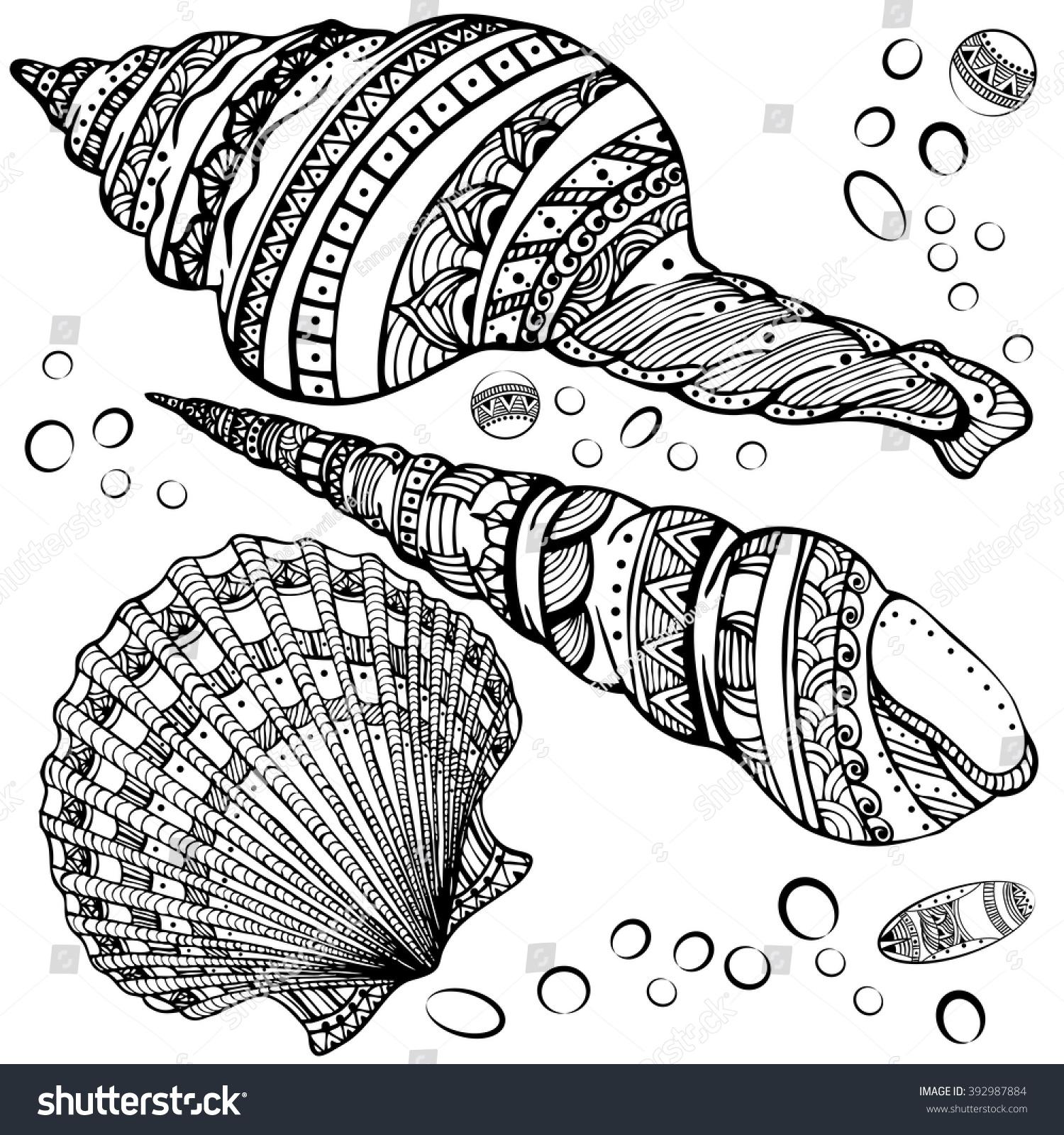 vector illustration set decorative seashells isolated stock vector