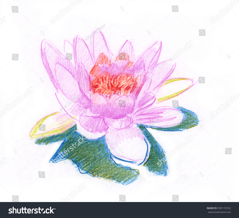 Watercolor Pencil Drawing Lotus Flower Stock Illustration 393119152