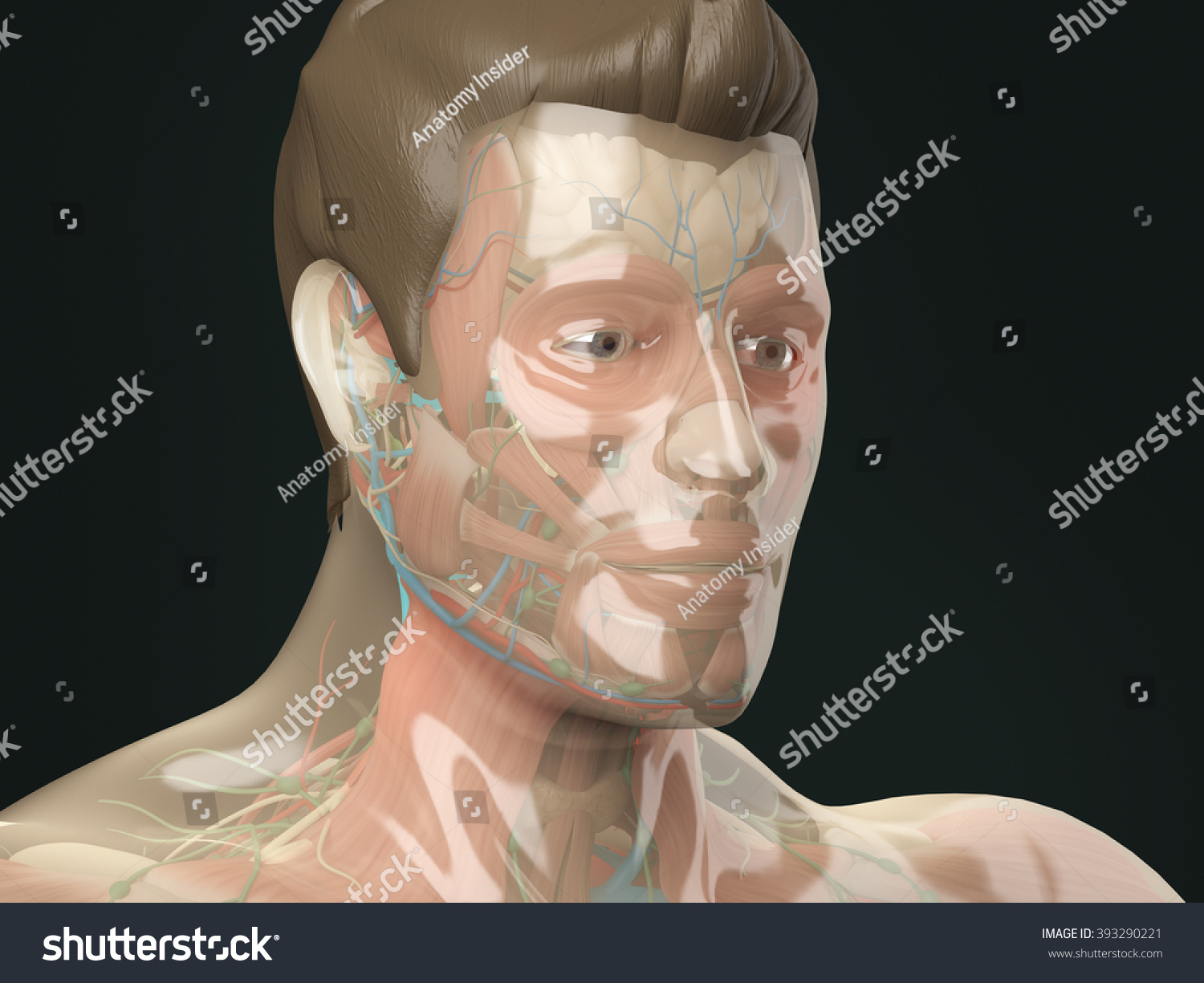 Royalty Free Stock Illustration of Glass Anatomy Human Anatomy See ...