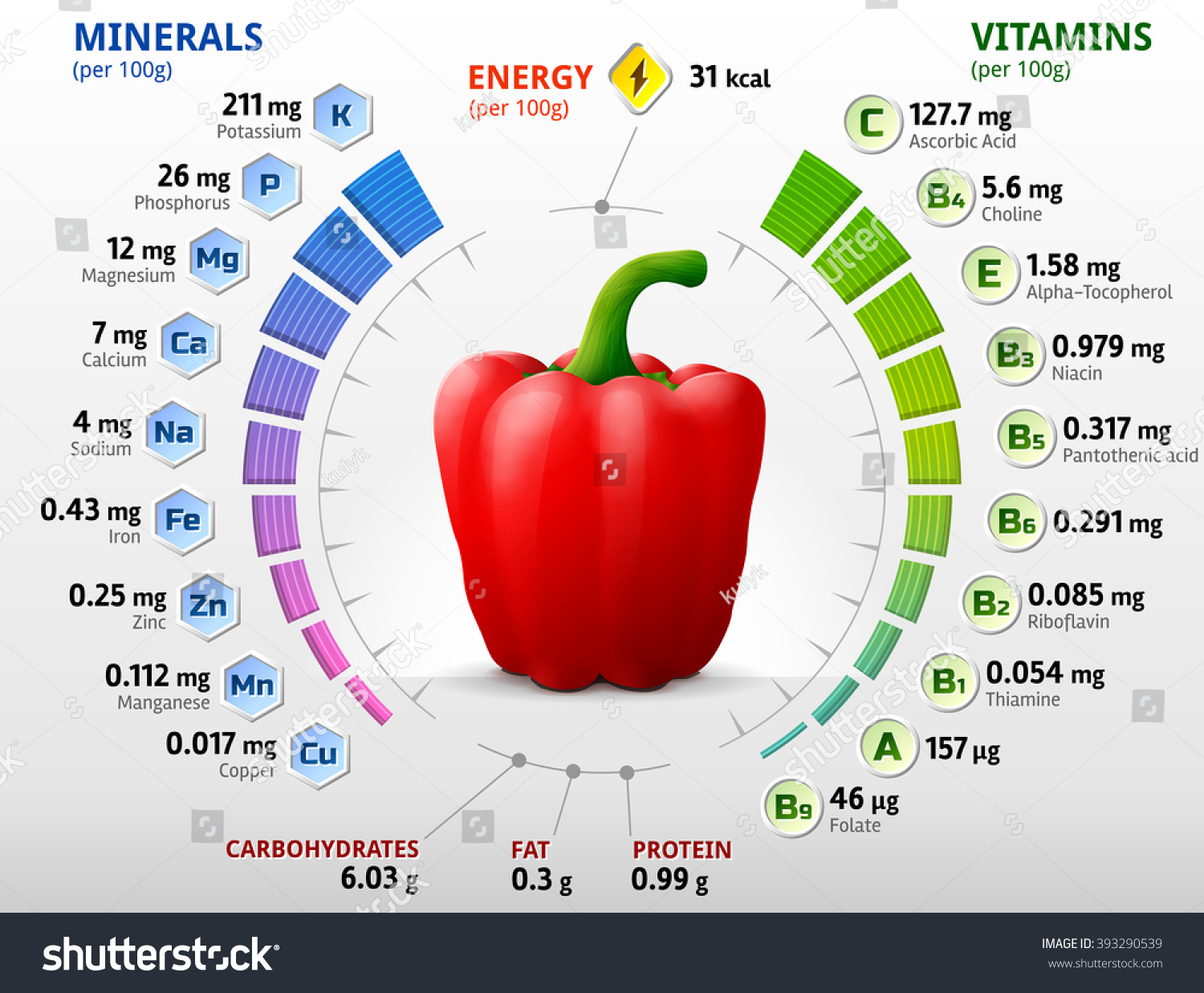 vitamins minerals red bell pepper infographics stock vector (royalty