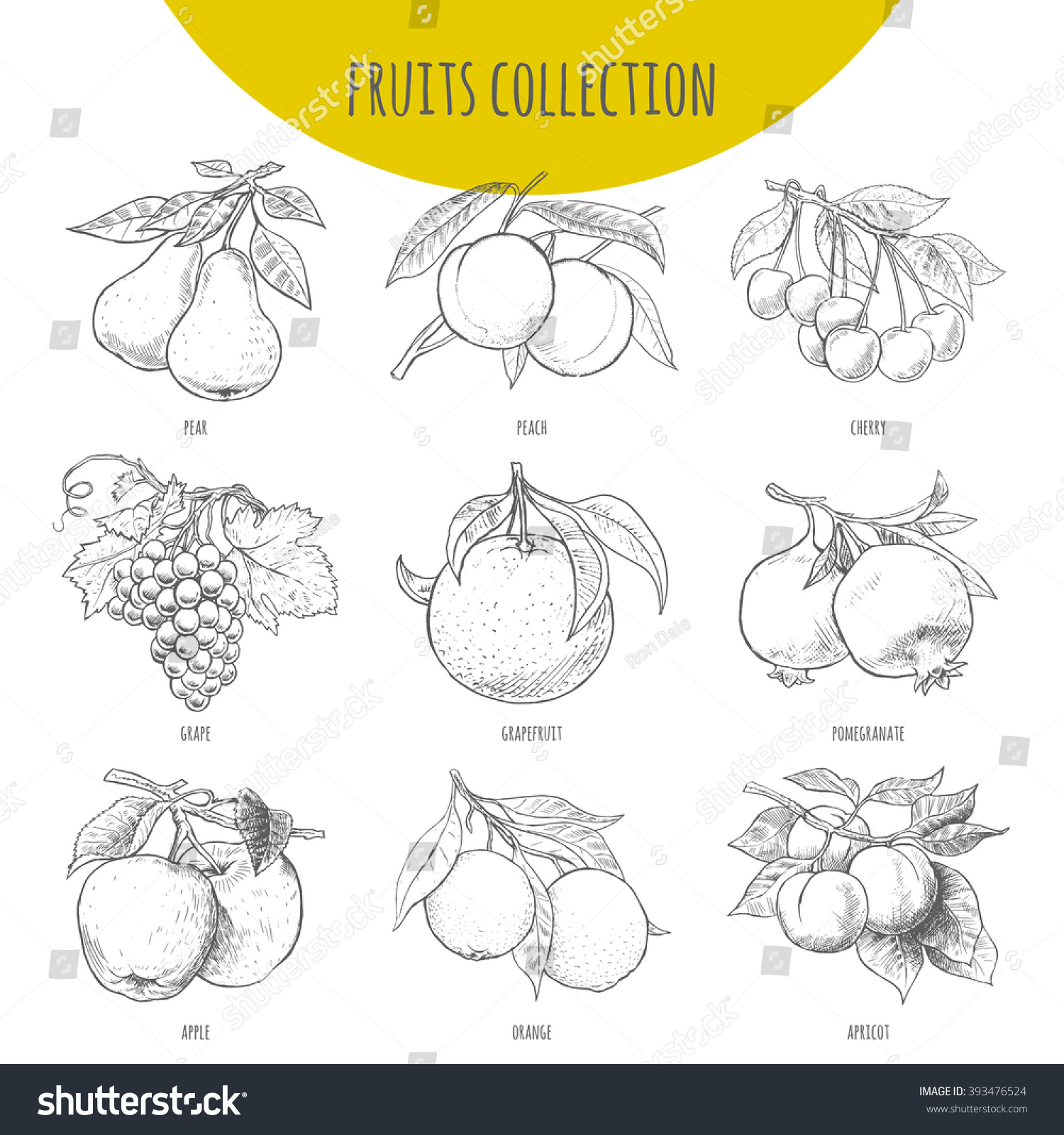 fruits set vector freehand pencil drawn stock vector 393476524