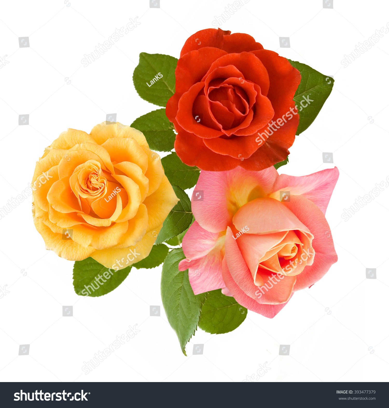 Redyellow And Pink Rose Flowers Bunch Isolated On White Background