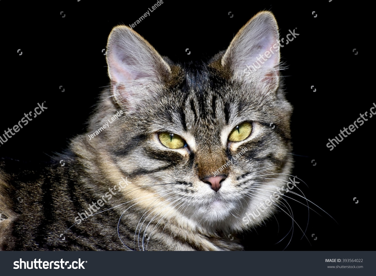 Pretty Cat Stock Shutterstock