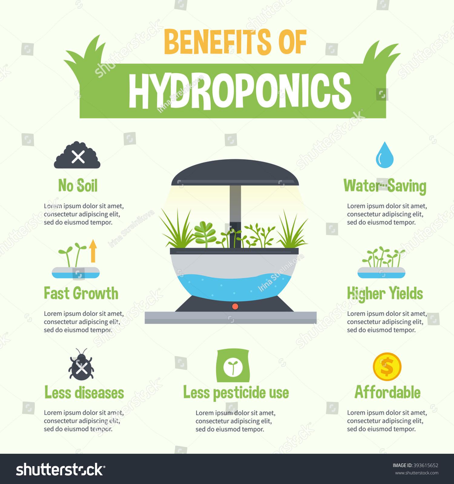 Hydroponics Benefits Infographic Vector Hydroponic