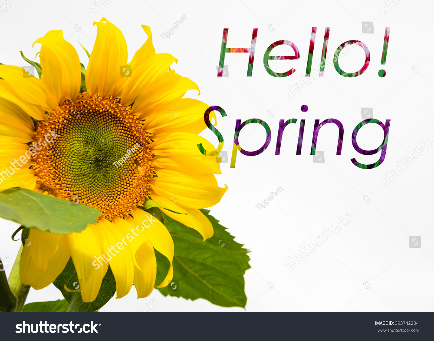 Spring Quote On Sunflower Background Colorful Stock Photo Edit Now 393742204