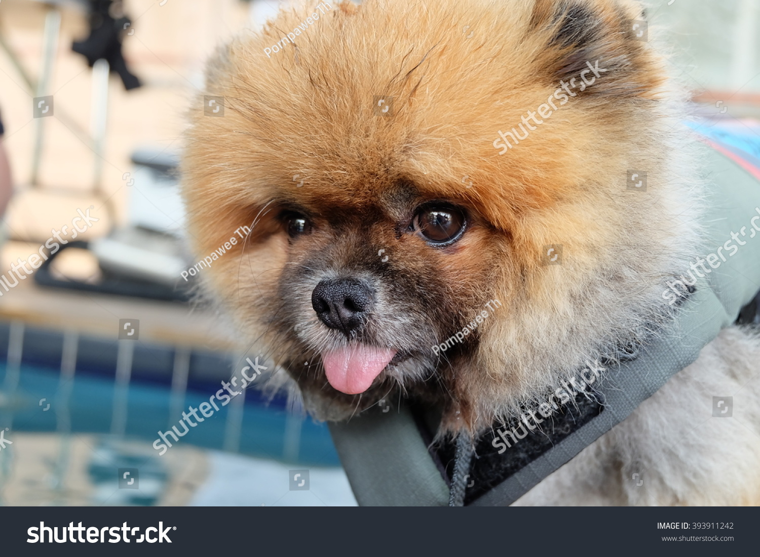 Cute dog make funny face stock photo 393911242 shutterstock cute dog make funny face voltagebd Image collections