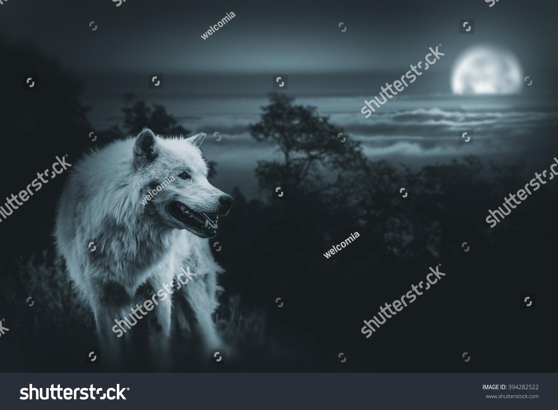 Wolf King Wilderness White Alpha Wolf Stockfoto (Lizenzfrei ...