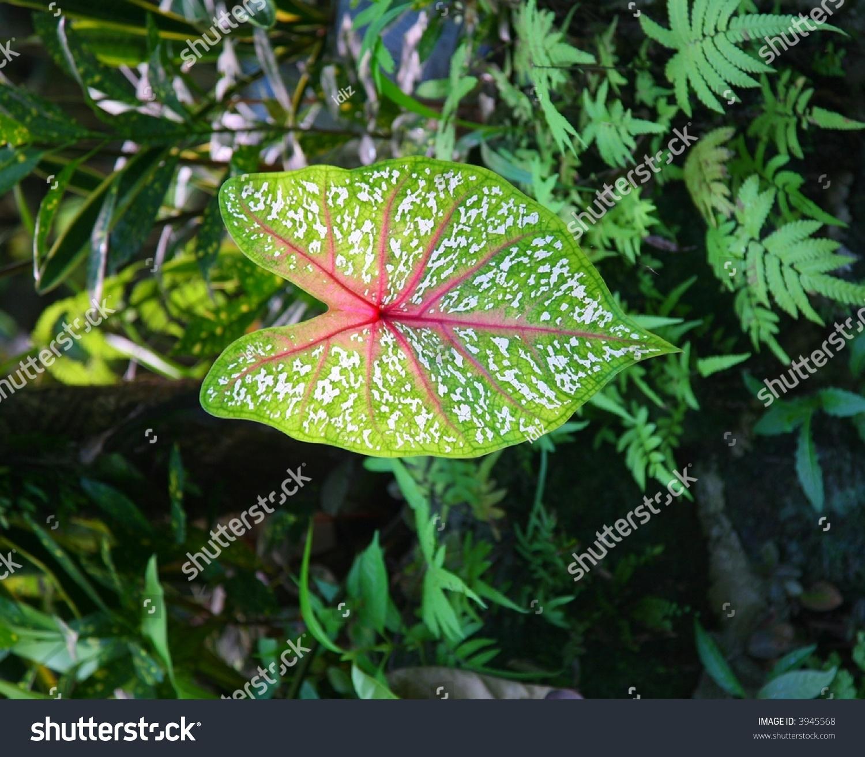 Rainforest Plant Leaves Stock Photo 3945568 - Shutterstock